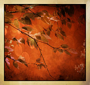 Nina Bradica Framed Prints - Golden Leaves-1 Framed Print by Nina Bradica