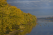 Golden Digital Art - Golden Leaves Along the Delaware by Bill Cannon