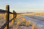 Rural Snow Scenes Posters - Golden light along the fence line Poster by Dana Moyer
