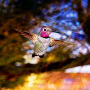 Duchess Digital Art Prints - Golden Light Hummingbird Flight Print by Jeanette Brown