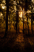 Darwin Photos - Golden light in Darwin by Zoe Ferrie