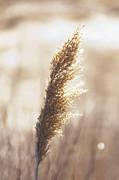 Scott Evers - Golden Light