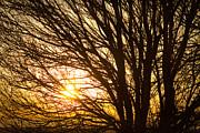James BO  Insogna - Golden Light Shining Through