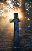 Grave Photo Metal Prints - Golden Light Metal Print by Tim Gainey
