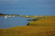 Amazing Jules - Golden Marsh