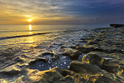 Beachscapes Posters - Golden Morning Poster by Debra and Dave Vanderlaan