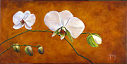 Suzie Richey - Golden Orchids