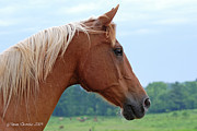 Palomino Photos - Golden Overseer by Renee Forth Fukumoto