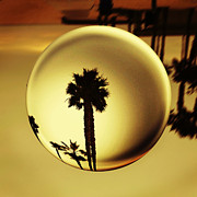 Low Angle View Originals - Golden Palm Tree Crystal Sunset by Amyn Nasser