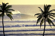 Waves Energy Framed Prints - Golden Palms Framed Print by Sean Davey