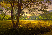 Tn River Prints - Golden Pastures Print by Debra and Dave Vanderlaan