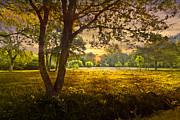Golden Pastures Print by Debra and Dave Vanderlaan