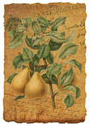 French Pears Prints - Golden Pears Print by Traci Vanover