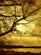 Golden Pond Print by Ann Powell