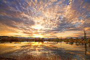 Photography Prints Prints - Golden Ponds Scenic Sunset Reflections 2 Print by James Bo Insogna
