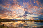 Golden Ponds Scenic Sunset Reflections 4 Print by James BO  Insogna