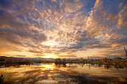 Photography Prints Prints - Golden Ponds Scenic Sunset Reflections 5 Print by James Bo Insogna