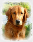 Dog Portrait Digital Art Originals - Golden Portrait by Betsy Cotton