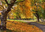Autumn Scenes Photos - Golden Public Garden by Joann Vitali