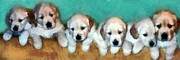 Puppies Digital Art Posters - Golden Puppies Poster by Michelle Calkins