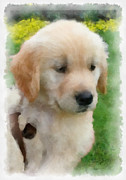 Puppy Digital Art Originals - Golden Puppy Owen by Betsy Cotton
