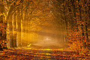 Herfst Posters - Golden rays of Autumn Poster by Ron Buist