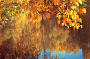 Jenny Rainbow - Golden Reflections in the Pond