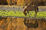 Saija  Lehtonen - Golden Reflections of Autumn