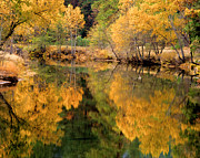Terry Garvin Prints - Golden Reflections Print by Terry Garvin