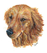 Barb Capeletti - Golden Retriever