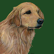 Pets Paintings - Golden Retriever   by Dale Moses