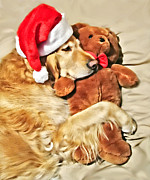 Santa Hat Posters - Golden Retriever Dog Christmas Teddy Bear Poster by Jennie Marie Schell