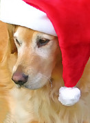 Funny Animals Prints - Golden Retriever Dog in Santa Hat  Print by Jennie Marie Schell
