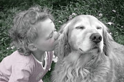 Little Dogs Photos - Golden Retriever Dog Kiss from a Child by Jennie Marie Schell