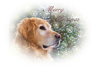 Golden Brown Prints - Golden Retriever Dog Merry Christmas Print by Jennie Marie Schell