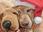 Santa Hat Posters - Golden Retriever Dog Waiting for Santa Poster by Jennie Marie Schell