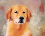 Dog Show Posters - Golden Retriever Poster by Jai Johnson