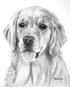 Charcoal Dog Drawing Drawings Posters - Golden Retriever Jessie Adult Poster by Kate Sumners