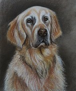 Hound Pastels Framed Prints - Golden Retriever Framed Print by Lucy Deane