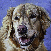 Blue Acrylic Prints - Golden Retriever - Molly by Enzie Shahmiri