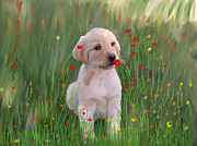 Saving Paintings - Golden Retriever Puppy  by Angela A Stanton