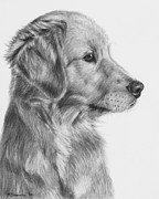 Pup Drawings Posters - Golden Retriever Puppy in Charcoal One Poster by Kate Sumners