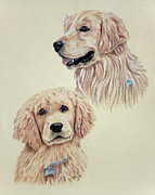 Pup Drawings Posters - Golden Retriever Poster by Terri Mills