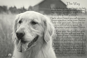 Pet Loss Posters - Golden Retriever The Way Poster by Sue Long