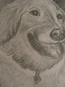 Retrievers Drawings - Golden Retriever by Venice  Kichura