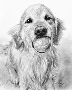 Charcoal Dog Drawing Drawings Posters - Golden Retriever with Ball Poster by Kate Sumners
