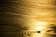 Sun Pyrography Prints - Golden sea with boat at sunset Print by Raimond Klavins