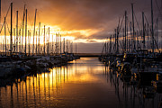 Marina Framed Prints - Golden Shilshole Marina Glow Framed Print by Mike Reid