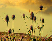 Field Image Prints - Golden Sky Print by Gothicolors And Crows