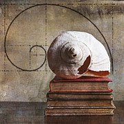 Interior Still Life Metal Prints - Golden Spirals Metal Print by Terry Rowe